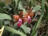 Орхидеи - 4