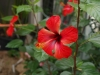 Ботаническата градина - 12