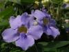 Ботаническата градина - 10