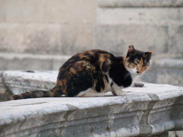 Котки - 2