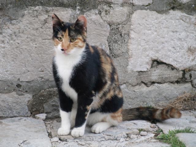 Котки - 3