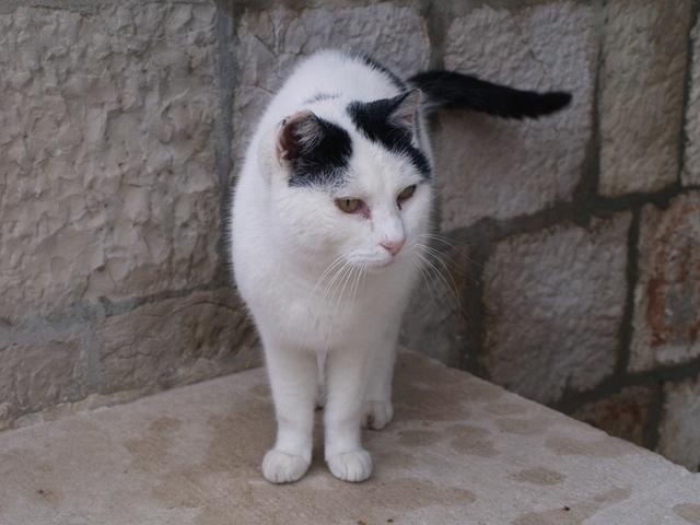 Котки - 4