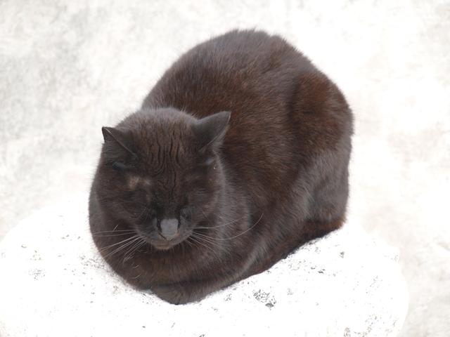 Котки - 10