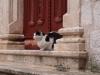 Котки - 9