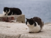 Котки - 11