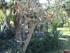 Градините - 18