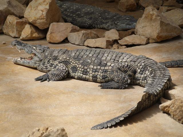 Крокодили - 2