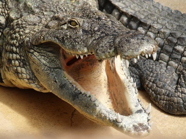 Крокодили - 3