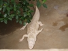 Крокодили - 8