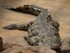 Крокодили - 4
