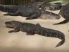 Крокодили - 6
