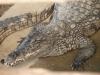 Крокодили - 7