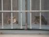 Котките