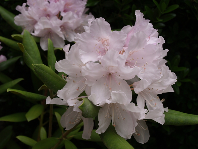 Цветята - 2