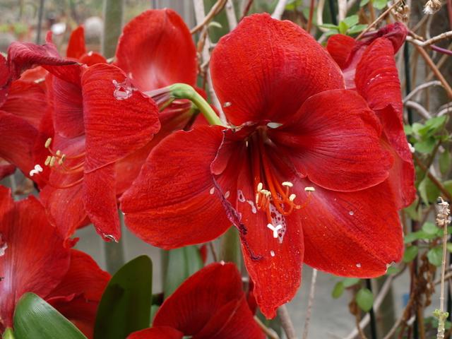 Цветята - 4