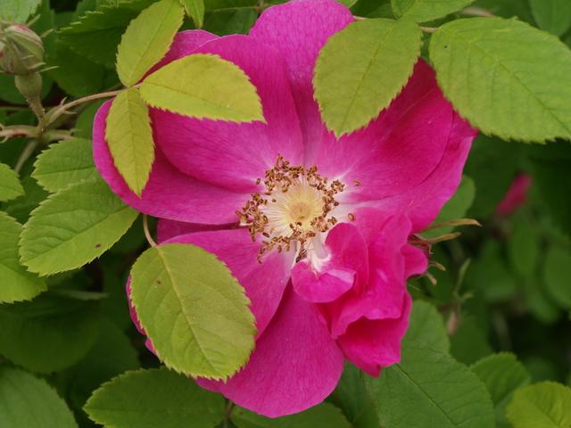 Цветята - 9