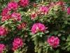 Цветята - 1