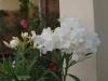 Градина - 2