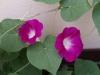 Градина - 13