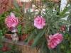 Градина - 4