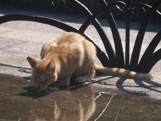 Котак - 1