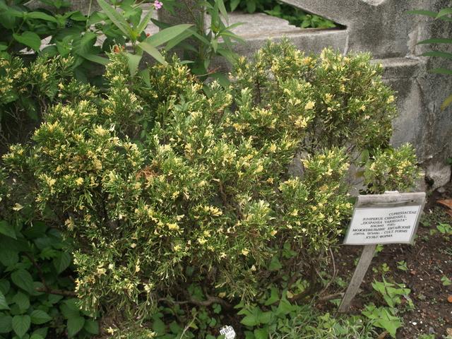 Растения - 3