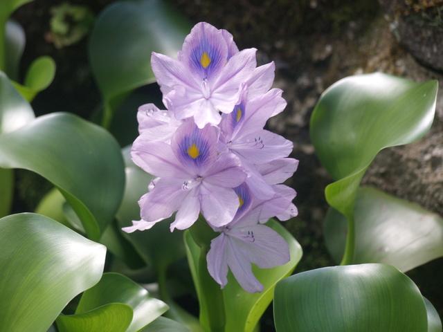 Цветя - 2