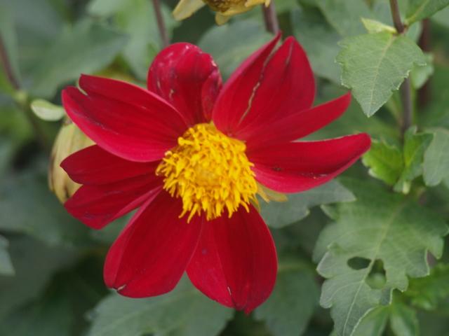 Цветя - 4