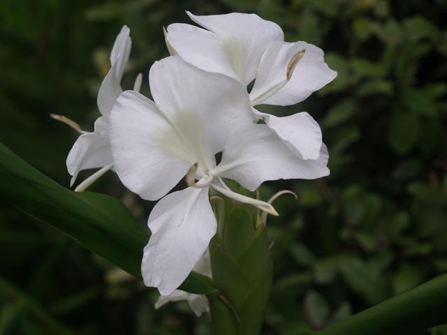 Цветя - 9