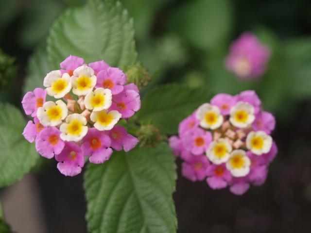 Цветя - 10