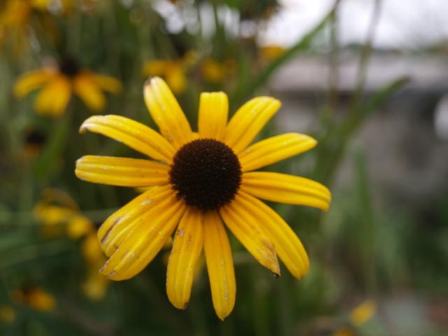 Цветя - 14
