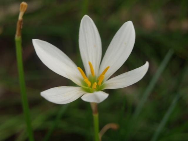 Цветя - 15