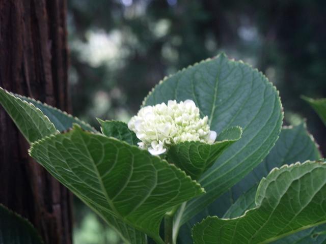 Цветя - 16