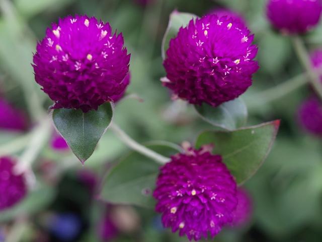 Цветя - 18