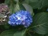 Цветя - 17