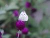 Цветя - 19