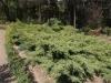 Ниски растения - 1
