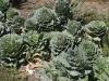 Ниски растения - 4