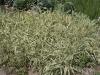 Ниски растения - 3