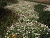 Ниски растения - 5