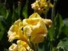 Ниски растения - 7
