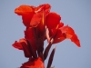 Ниски растения - 8