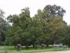 Паркът на Егенберг - 4