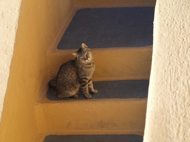 Котките - 2