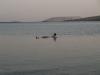 Мъртво море - 6
