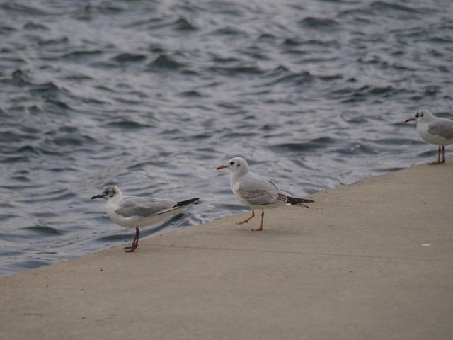 Чайките - 2