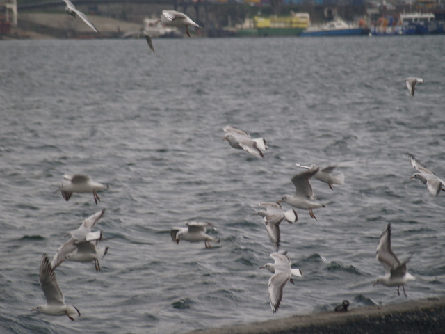 Чайките - 3