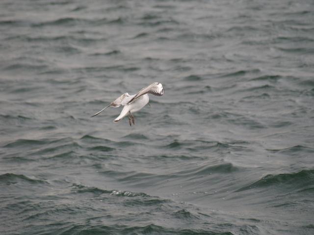 Чайките - 9