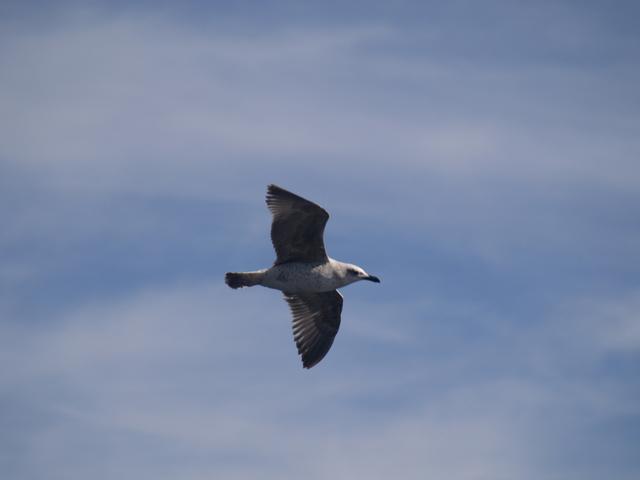 Чайките - 13