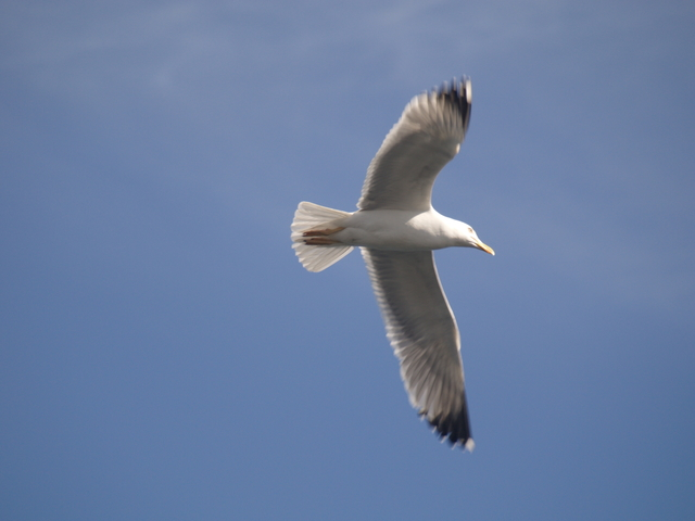 Чайките - 15